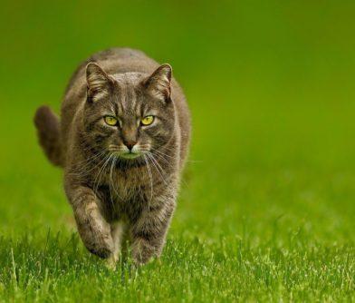 prodcte gatos